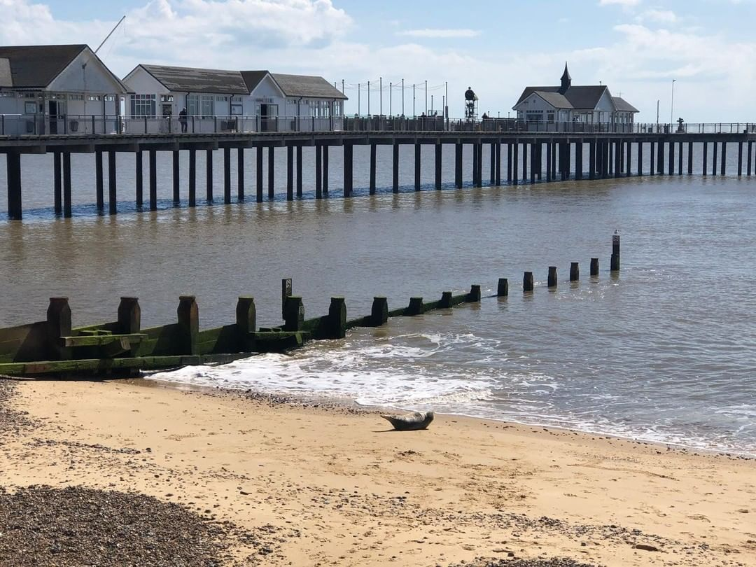 This weather is perfect for relaxing at the Pier, just like one of our recent visitors…⠀ #sealife #suffolk #southwoldpier #southwold #seal