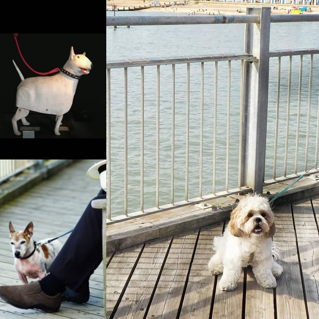 April is #nationalpetmonth and here at the Pier we are always very excited meeting new four legged friends 🐾 We also have our own Walk the Dog attraction in the Under the Pier Show…